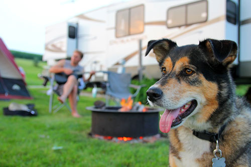 "camp-with-dog ""width ="" 500 ""height ="" 333 ""srcset ="" https://hund.info/wp-content/uploads/2015/05/campen-with-dog.jpg 500w, https: // hund.info/wp-content/uploads/2015/05/campen-with-dog-300x200.jpg 300w, https://hund.info/wp-content/uploads/2015/05/campen-with-dog-310x205 .jpg 310w ""data-lazy-sizes ="" (max-width: 500px) 100vw, 500px ""></p> <p></p> <p></p> <p><strong>Attention when traveling abroad</strong></p> <p></p> <p>Who with his dog not only in <a href="