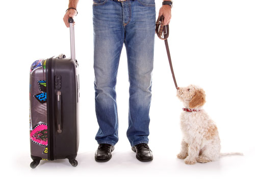 "Air travel-with-dog ""width ="" 500 ""height ="" 374 ""srcset ="" https://hund.info/wp-content/uploads/2015/05/flight-travel-with-dog.jpg 500w, https: // hund.info/wp-content/uploads/2015/05/Flugreisen-mit-Hund-300x224.jpg 300w ""data-lazy-sizes ="" (max-width: 500px) 100vw, 500px ""></p> <p></p> <p></p> <p>Traveling with a dog is an exciting experience for the pet as well. However, unlike with a car or train, the journey by plane is a particularly heavy burden, because only the smallest four-legged friends are allowed to fly with their master or mistress in the cabin. The animals spend the duration of the flight in a small cage under the seat. For the larger dogs over five kilograms it is necessary to spend the flight time in a transport container in the cargo hold. Dogs are often scared and feel abandoned by the loud noises. If you do not want to be able to do without flying with a dog, you should adjust the duration of the stay. A journey that lasts less than four weeks is out of all proportion to the hardships a larger dog suffers on the plane. So dog owners should go in such a case, better on the search for a loving care and close the dog after the holiday again in the arms. Small dogs, if allowed by the airline to drive in the cabin, can also be taken on shorter trips.</p> <p></p> <p></p> <p><strong>Flight booking and transport box</strong></p> <p></p> <p>A particularly crucial criterion for the flight with dog is the timely booking of the flight. Especially if your own four-legged friend wants to fly in the cabin, the flight should be booked quite some time before the holiday date. The reason for this is the fact that most airlines do not leave animals in the aircraft cabin indefinitely. If several dogs are already registered with their masters at the time of booking, it can happen that the animal has to be relocated to the hold. Also, the presence of cats and dogs at the same time is not fine for any airline. Helpful here is a call to the respective airline to get the actual details about the flight. The information that travel agents provide is usually insufficient. Anyone who relies on this alone is often greeted at the airport with a nasty surprise. Another detail of the flight booking is the type of flight. Halter do no favors for their dog if they opt for flights with stopovers. Best suited for the flight with dog are always the so-called non-stop flights.</p> <p></p> <p>The purchase of a suitable transport box should also be timely. These boxes, which are often referred to in the trade as ""Kennels"" must be sufficiently large for the respective animal. In addition, inside the box should be enough space for food and water and adequate ventilation is also an absolute must. The transport boxes for air travel can</p> <p></p> <p>quite expensive. Dog owners should therefore take these costs into account in the travel budget. It makes special sense not to confront the dog on the day of the flight with the foreign box. The animal feels better if it can get to know and inspect the box a few days before departure. Also, the dog should, if he is ready to accept the transport box before the trip as a place to sleep. For the flight itself dog owners can also write the name of the animal on the box. The flight attendants, who occasionally look for the animals, can then address the dog personally and calm him down more easily. Also the own address and a telephone number belong to the box. It has certainly happened that a dog was no longer found after the flight. The one who finds the box then, can contact faster.</p> <p></p> <p>The interior of the transport box should be lined with a thick and soft fabric for longer flights. As the dog lays most of the time and hardly moves, it gets cold too fast and he suffers unnecessarily. By the way, hay and straw are not allowed for laying out the kennels. Since the dog can not suppress other physical needs during long air travel, a thick, absorbent pad should be attached to the bottom of the box. This pad absorbs urine reliably and prevents the animal from having to lie in the wet.</p> </pre> <div class='code-block code-block-2' style='margin: 8px auto; text-align: center; display: block; clear: both;'> <script async src="