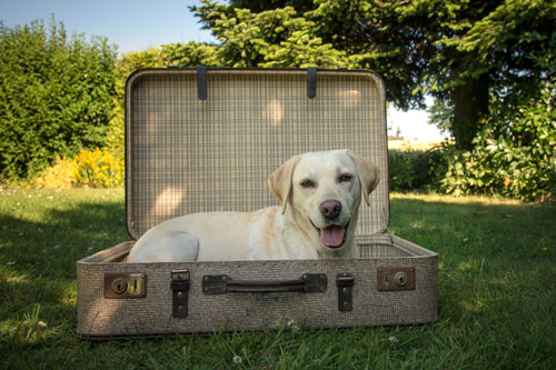 "checklist-travel-with-dog ""width ="" 500 ""height ="" 333 ""srcset ="" https://www.ohadog.com/wp-content/uploads/2019/06/Holiday-with-dog-what-has-to-be-done.jpg 500w, https://hund.info/wp-content/uploads/2014/08/checkliste-reise-mit-hund-300x199.jpg 300w ""data-lazy-sizes ="" (max-width: 500px) 100vw, 500px ""></p> <p></p> <p>Abroad, some entry requirements apply, for example the presentation of a dog health certificate. Within the EU, as a rule, the <a href="