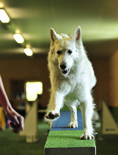 "Dog Vacation Hotel Wolf ""width ="" 381 ""height ="" 500 ""srcset ="" https://hund.info/wp-content/uploads/2015/02/dog-holiday-hotel-wolf.jpg 381w, https: // hund.info/wp-content/uploads/2015/02/Dog Holiday-Hotel-wolf-229x300.jpg 229w ""data-lazy-sizes ="" (max-width: 381px) 100vw, 381px ""></p> <p></p> <p><strong>Among other things, the hotel offers the following seminars / courses:</p> <div class="