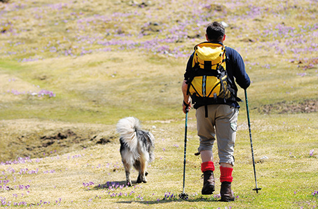 "husky-hiking-trail ""width ="" 458 ""height ="" 301 ""srcset ="" https://www.ohadog.com/wp-content/uploads/2019/06/The-Husky-hiking-getaway-at-the-Rennsteig.jpg 458w, https: // hund.info/wp-content/uploads/2015/09/husky-wandern-rennsteig-300x197.jpg 300w, https://hund.info/wp-content/uploads/2015/09/husky-wandern-rennsteig-310x205 .jpg 310w ""data-lazy-sizes ="" (max-width: 458px) 100vw, 458px ""></p> <p></p> <p><strong>Equipment and clothing</strong></p> <p></p> <p>– Well-walked hiking boots</p> <p></p> <p>– Weatherproof clothing and mattress and a sleeping bag</p> <p></p> <p>The equipment for the dog trekking is provided and the voucher is valid for one person and the group size 2 to 6 participants per group.</p> <p></p> <p><strong>The services</strong></p> <p></p> <p>– A 3-day hike with huskies</p> </pre> <div class='code-block code-block-2' style='margin: 8px auto; text-align: center; display: block; clear: both;'> <script async src="