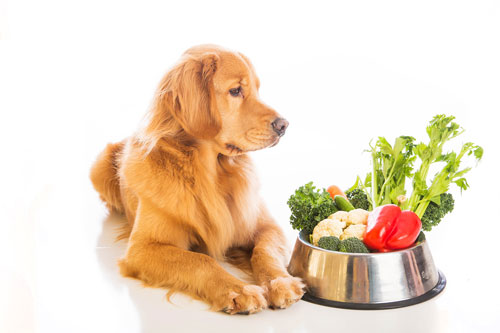 """vegetarian-recipes-dog """"width ="""" 500 """"top ="""" 333 """"srcset ="""" https://hund.data/wp-content/uploads/2014/07/vegetarian-rezepte-hund.jpg 500w, https: // hund.data/wp-content/uploads/2014/07/vegetarian-rezepte-hund-300x199.jpg 300w """"data-lazy-sizes ="""" (max-width: 500px) 100vw, 500px """"></p> <p></p> <p><strong>Vegetarian vegetable soup</strong></p> <p></p> <p>A vegetable soup is a scorching meal that fills the abdomen and gives many necessary nutritional vitamins – not just for people, but in addition for the canine. It doesn't essentially have a meat insert, as a result of a colourful number of greens additionally gives selection.</p> <p></p> <p><span style="""